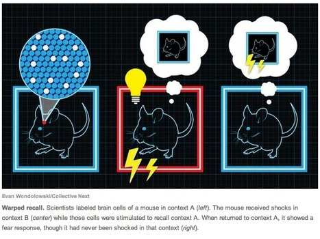 'Total Recall' for Mice: Implanting False Memories into a Mouse Brain | Amazing Science | Scoop.it