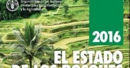 PROTECCION AMBIENTAL @INNGENIAR: FAO: Agricultura comercial generó casi el 70 % de la deforestación en América Latina | Agroindustria Sostenible | Scoop.it