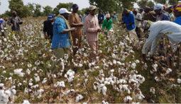 Développement rural : Lancement des nouveaux villages agricoles à l'Office du Niger | Questions de développement ... | Scoop.it