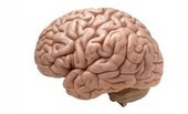 Obama Administration To Create Project To Map The Human Brain | Whole Brain Leadership | Scoop.it