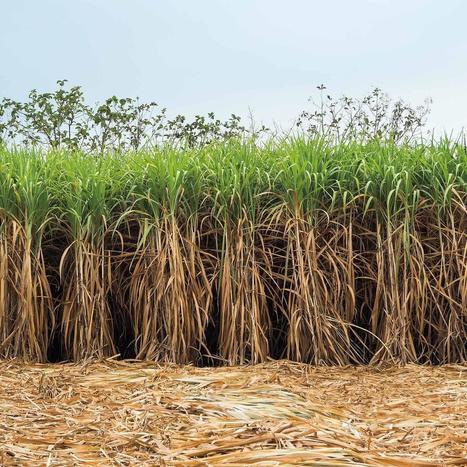 The future of second-generation biomass | McKinsey & Company | Estudios de futuro | Scoop.it