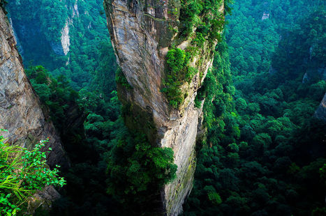 China Announces That It Will Cover Nearly A Quarter Of The Country In Forest By 2020... | The Landscape Café | Scoop.it