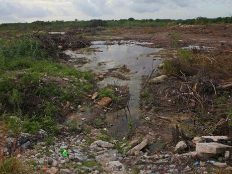 Naturaleza revive en Tajamar tras devastación | Ecología - Dietética  y Nutrición | Scoop.it