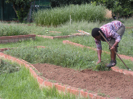 Five Ways to Get Rid of Pests Without Using Chemicals | Organic Farming | Scoop.it
