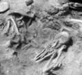 Patelles et bigorneaux, quand les derniers préhistoriques sillonnaient la Bretagne   Aux origines   Scoop.it