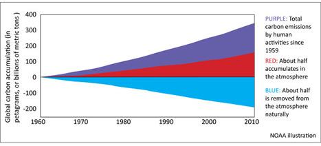 La Terre absorbe encore 50% du carbone émis par l'homme | Des 4 coins du monde | Scoop.it