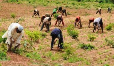 Nigéria : le gouvernement fournira 1 million de tonnes d'engrais aux agriculteurs, d'ici mars | Questions de développement ... | Scoop.it