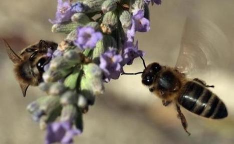 Le «dynamisme» des abeilles affecté par la qualité de l'environnement | EntomoNews | Scoop.it
