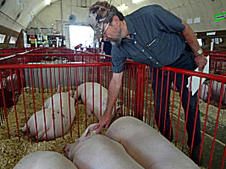 State Fair watching closely for signs of swine flu - Minnesota Public Radio | Livestock | Scoop.it