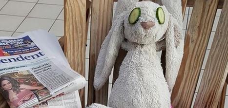 Un doudou oublié passe des vacances de rêve dans un hôtel de luxe | Chambres et table d'hôtes dans un Moulin à eau | Scoop.it
