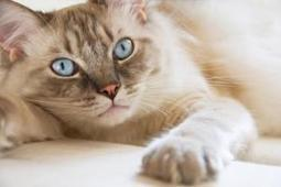 Cat Brain: A Step Toward the Electronic Equivalent   Biomimicry   Scoop.it