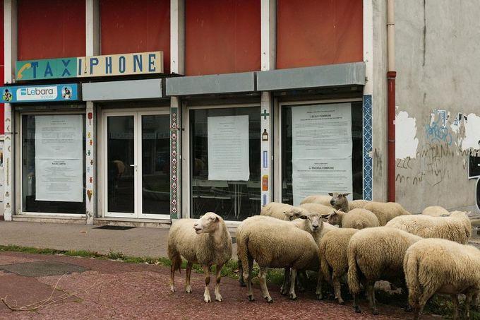 Les moutons sont entrés dans Paris - Libération