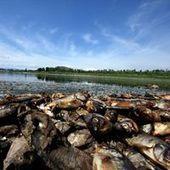 500 tonnes de poissons morts dans des eaux polluées au Mexique | La Spiruline : une algue très douée... pour 1 kg de protéines | Scoop.it