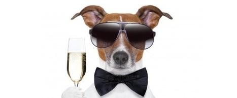 Les 6 bonnes raisons de célébrer le #Champagneday   AUBE, Soyez surpris !   Aube en Champagne   Scoop.it