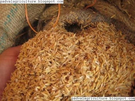 Substratos hidropónicos   Cultivos Hidropónicos   Scoop.it
