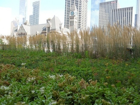 What Cities Can Learn From Toronto's Green Roof Policy | green streets | Scoop.it