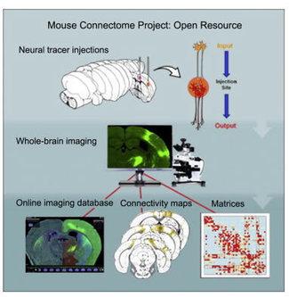 Construyen el mapa de la corteza cerebral más amplio hasta la fecha | Mundo WIKI | Scoop.it
