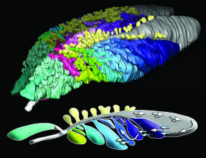 The mystery of lizard breath: One-way air flow may be 270 million years old | Amazing Science | Scoop.it