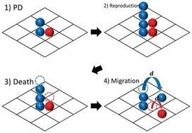 Collective Chasing Behavior between Cooperators and Defectors in the Spatial Prisoner's Dilemma   Darwinian Ascension   Scoop.it