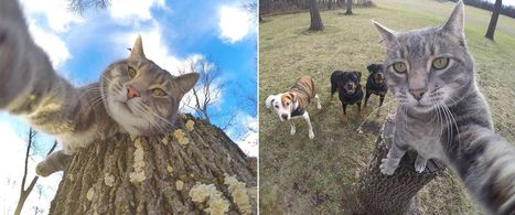 Manny the 'Selfie Cat' Takes Impressive Photos of Himself With a GoPro | Pet Sitter Picks | Scoop.it
