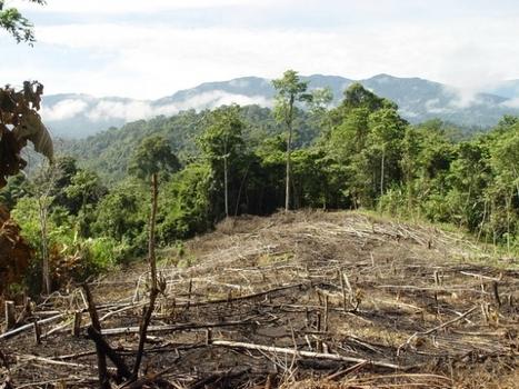 Brasil no consigue frenar la deforestación de la Amazonia ( deforestación; amazonia; brasil; china; copenhague; durban ) | Conocimiento libre y abierto- Humano Digital | Scoop.it