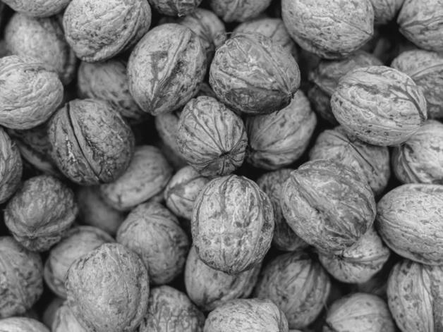 PORTUGAL: First walnut processing plant