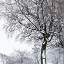 Winter Photography: Making The Most of Snow | Photography tips and tools | Scoop.it
