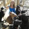 Dog Boarding Cage Free Sitting Grooming Kemptville Ottawa Ontario
