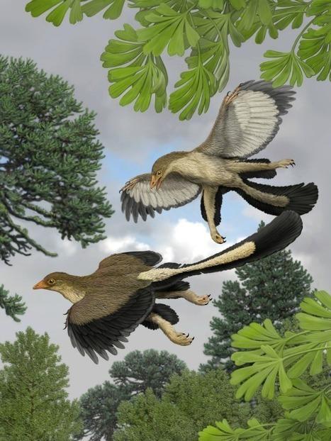 Feathers Fuel Dinosaur Flight Debate | Paleontology News | Scoop.it