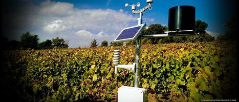 The Internet of Wine: Smart and Connected Vineyards   Grande Passione   Scoop.it