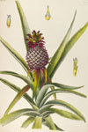 MBG Rare Books: Browse Titles | Herbaria | Scoop.it