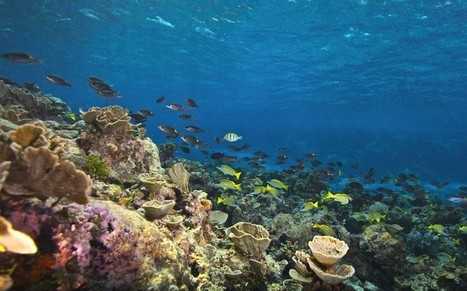 Mapping the Great Barrier Reef: the Catlin Seaview Survey - Telegraph | In Deep Water | Scoop.it
