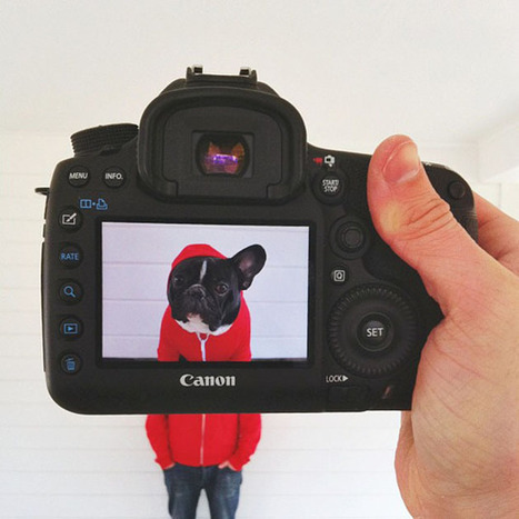 Petheadz: Una Original Serie Fotográfica que Fusiona a las Mascotas con sus Dueños | Arte y Diseño | Scoop.it