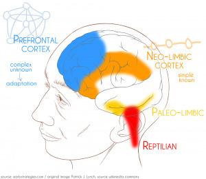 Entreprise 2.0 et Cerveau, quels parallèles? | Coaching de l'Intelligence et de la conscience collective | Scoop.it
