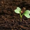 Autour de l'agroécologie...