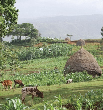 Cover Photo — April 29, 2014, 111 (17) | Rice origins and cultural history | Scoop.it