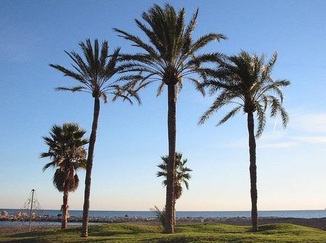 [#IGITI EBK] A - Je ressemble à un palmier - De la science sauvage pour des cerveaux en ébullition | C@fé des Sciences | Scoop.it