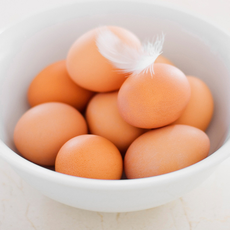 Is it safe to store your eggs on the counter instead of in the fridge? | Troy West's Radio Show Prep | Scoop.it