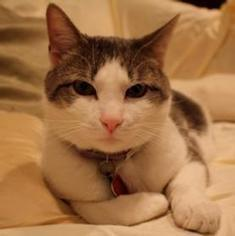 Why do cats purr?: Scientific American | Feline Health and News - manhattancats.com | Scoop.it