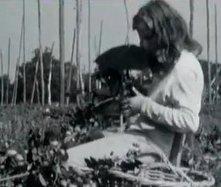 La fête du houblon de Steenvoorde | Région Nord-Pas-De-Calais | L'écho d'antan | Scoop.it