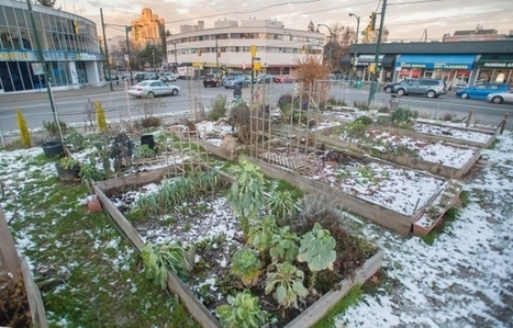 Industrial Metals Contaminate Vancouver Community Garden - Brownfield Sites | Green Building Design - Architecture & Engineering | Scoop.it