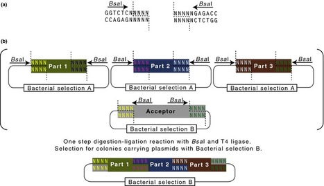 New Phytologist: Standards for plant synthetic biology: a common syntax for exchange of DNA parts (2015) | Biotech | Scoop.it