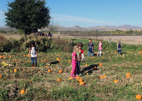 A pumpkin of their very own | CALS in the News | Scoop.it