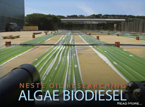 Neste Oil ups algae research for biodiesel | Sustain Our Earth | Scoop.it