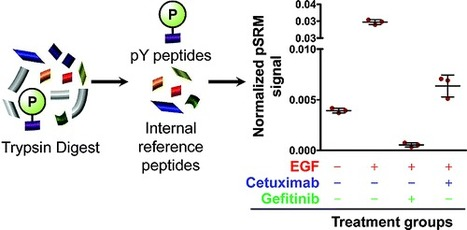 Label-Free Quantitation of Protein Modifications by Pseudo Selected Reaction Monitoring with Internal Reference Peptides - Journal of Proteome Research (ACS Publications)   Mass Spectrometry Geekery   Scoop.it