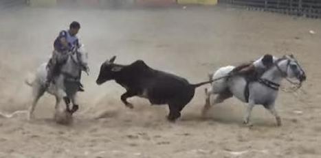 Brazil: Cruelty Isn't Culture   Nature Animals humankind   Scoop.it