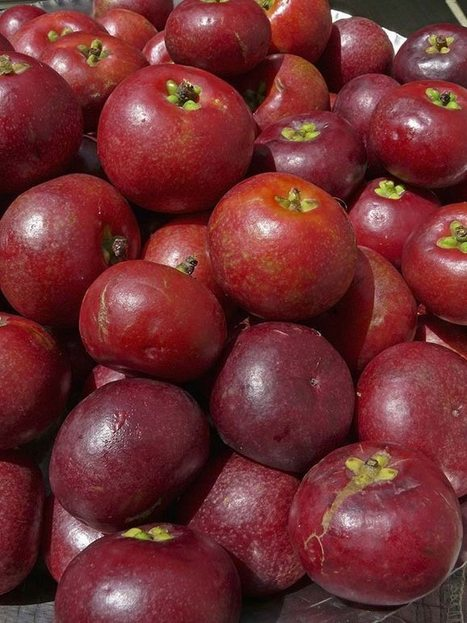 Kokum comes of age: The perfect-skin secret you've never heard of! | The Beauty Gypsy | Scoop.it