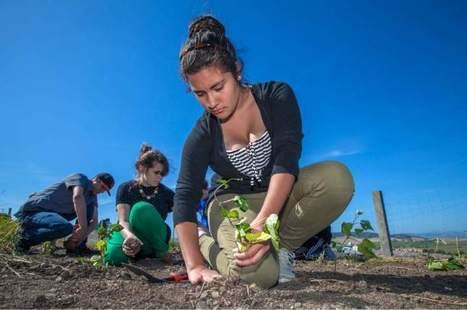 Sonoma, CA school gardens continue to grow | Homework Helpers | Scoop.it