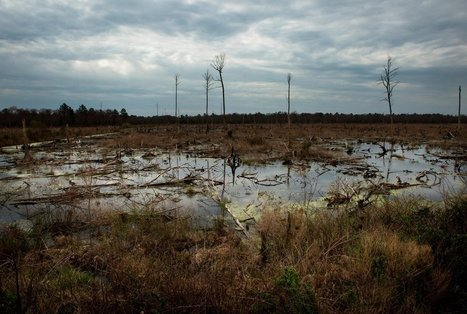 Deep in the Swamps, Archaeologists Are Finding How Fugitive Slaves Kept Their Freedom | Richard Grant | Smithsonian Magazine | immersive media | Scoop.it