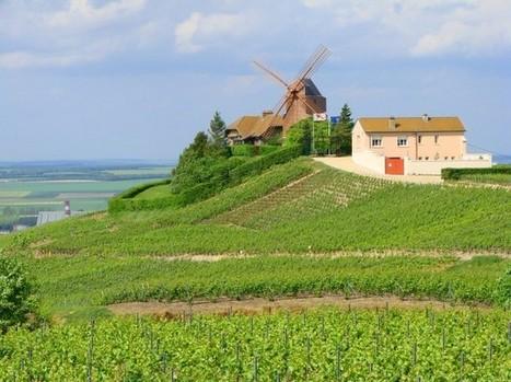 2013 Champagne harvest declared vintage quality   Autour du vin   Scoop.it